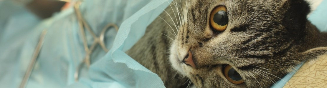 Weke delen chirurgie kat: het gastro-intestinale systeem - Editie 5